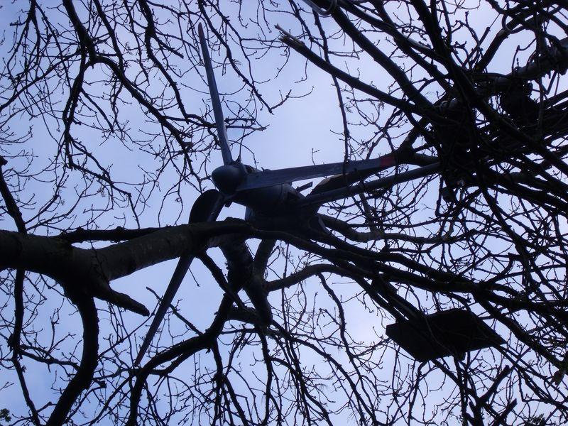 GB3WB wind turbine wedged in the tree