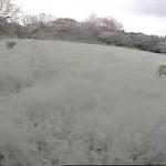 20140519_114135_Field Cam