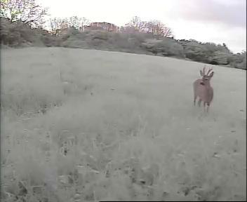 GB7WB Deer