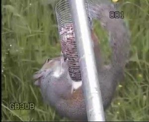 GB3WE Squirrel Still Trying!