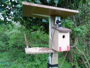 GB3WB Post Bird Box
