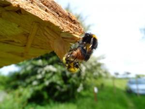 GB7WB Bees