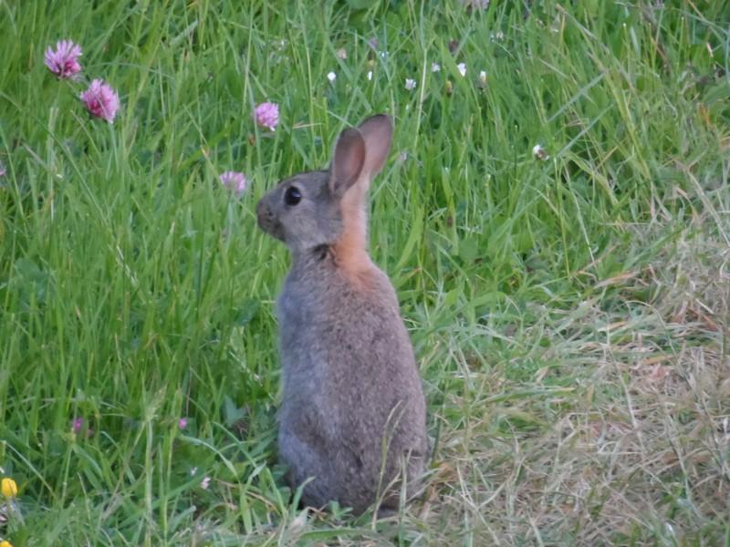 GB3WE Rabbit