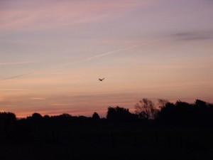 GB3WB bird of pray breakfast at sunrise
