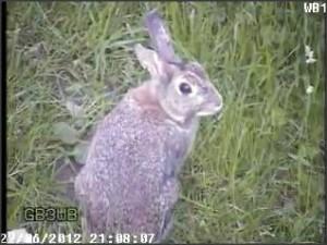 Snap 2012-06-22 at 21.08.25 (GB3WB Wildlife)