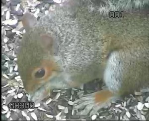 GB3WE Squirrel Close-Up